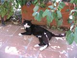The crazy cat at Capovento